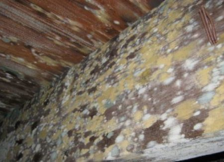 Residential Attic Mold Removal